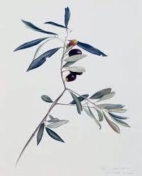 ♥ Lavender & Olive ♥ // Lavander // #olive