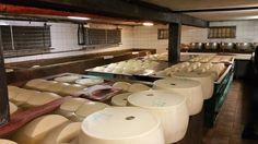 #SanPierDamiani #3333 #ParmigianoReggiano #theonlyparmesan #parma #cheese #food #brine #cheesedairy