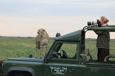 Cheetah on safari vehicle, Masai Mara by Richard Ainsworth