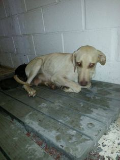 Urgent PLEASE HELP.!! MOMMA DOG AND 1 WK BABIES NEED OUT.!!! DAVIS OK SHELTER .!!! LAB MOMMA. !! Aco Josie Hall 580 369 3333 OR DEBRA 580 247 0621.!!! Please please help.!! 5 babies and mamma need rescue.!!! https://www.facebook.com/photo.php?fbid=348906845254516&set=a.102098106602059.3749.100004056091048&type=1&theater