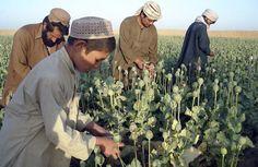 Poppy farmers.  Afghanistan produces 92% of the world's poppy's.