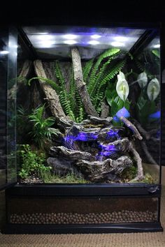 "DIY this 18""x18""x24"" Zoo Med terrarium by layering HydroBalls, ReptiSoil, and your choice of live plants throughout the terrarium. Then place a ReptiRapids LED Waterfall and several branches in an arrangement of your liking."