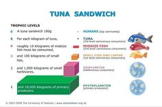 DIAGRAM - On average, only 10% of the energy from an organism is transferred to its consumer. This means that a top-level consumer, such as a tuna, is...