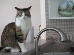 This cat who is pissed you thought she cared in the first place. | 16 Cats Who Don't Care If You Like Them