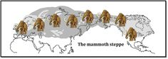 #IceAgeFact: The #mammoth steppe stretched from Ireland to New York at the Last Glacial Maximum c. 22,000 years BP