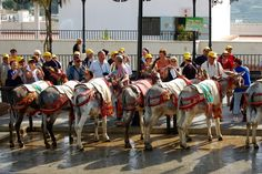 The burro taxis! Mijas Spain, Travel Images, Burritos, Places To Travel, Places Ive Been, June, Memories, Spaces, Woman