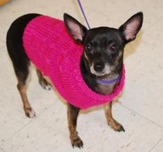 Tina is an adoptable Chihuahua Dog in Vineland, NJ. Tina is a very sweet, three year old chihuahua. Before she ended up in the shelter, Tina was a well loved house pet, house broken and good with othe...