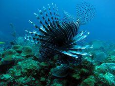 King Fish - Photo by Ken Yang