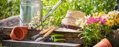Como viajar sem culpa de deixar o jardim sozinho - Vai viajar neste fim de ano? Apostamos que você está preocupado em deixar seu jardim vários dias, não é mesmo? É normal essa preocupação, ainda mais que o verão é uma época em que devemos redobrar os cuidados com as plantas. Nem todo mundo tem a sorte de ter vizinhos confiáveis e que não vão sair... - http://www.ecoadubo.blog.br/ecoblog/2015/12/28/como-viajar-sem-culpa-de-deixar-o-jardim-sozinho/