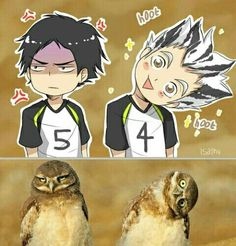 Akaashi and Bokuto Haikyuu!