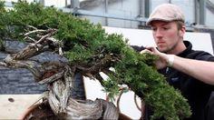Matt Reel styled this great tree at the Generation Bonsai event. #bonsai