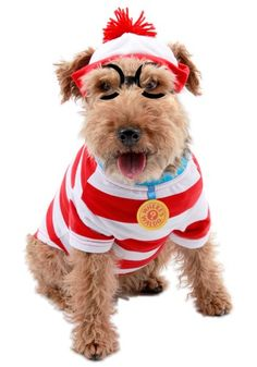 Waldo Woof Dog Costume  http://www.planetgoldilocks.com/  10%off