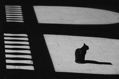 充滿神秘感的黑白貓咪攝影作品