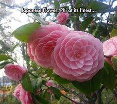 Fractals in real-life...