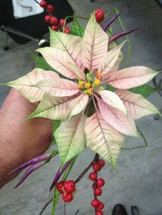 pink and white poinsettia - Google Search