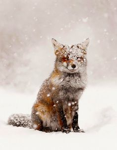 ETC INSPIRATION BLOG ART DEISGN HOME QUOTES PHOTOS PHOTOGRAPHY FOX SNOW SMILE WINTER