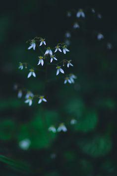 舞う。 by Koichi YOSHII on 500px