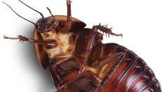 Лек против хлебарки