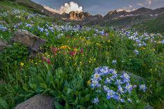 Wildflowers of American Basin | Near Lake City, Colorado - San Juan Mountains | Flickr - Photo Sharing!