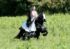 Promotion for Steffen S - Friesian Stallion