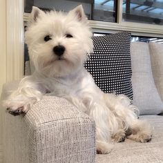 Monday's Mood! by emma_the_westie