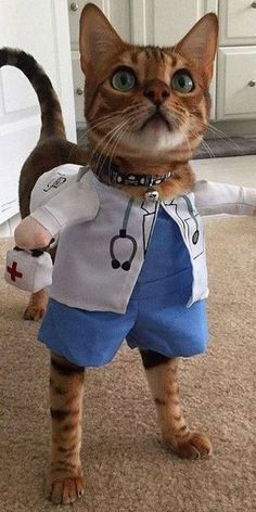 """Cats are are so awesome with amazing personalities and traits, until they're exposed by their owners."""" Doctor cat her , How are you feline Funny Animal Memes, Cute Funny Animals, Funny Animal Pictures, Cute Baby Animals, Cat Memes, Funny Dogs, Funny Memes, Funniest Animals, Cute Cats And Kittens"""