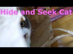 猫のかくれんぼ♪Hide and Seek Cat,cat video,Cats and Kittens,cat25,猫ニャーゴ