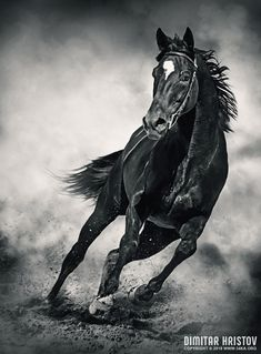 Rate this post Black Horse – Running Wild Black Horse – Running Wild photography photomanipulation featured equine photography animals Photo Wild Animals Photography, Wild Photography, Equine Photography, Pretty Horses, Beautiful Horses, Animals Beautiful, Wild Animals Pictures, Animal Pictures, Horse Photos