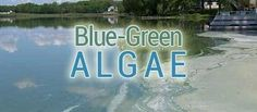 From the Lakeland Times:  8/5/2014 4:24:00 PM Blue-green algae bloom in Pelican Lake results in warning against water contact or use