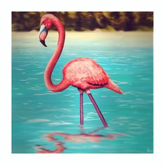 Drawing of Flamingo  Made in summer with Photoshop