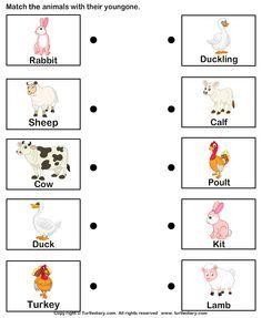 Animals And Their Babies Worksheets For Kindergarten Pdf