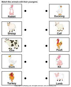 Animals And Their Babies Worksheets For Kindergarten Pdf - Kidz