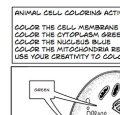 Plant Animal Cells coloring activity worksheet 6th 7th 8th