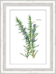 Rosemary Herb Framed Art – Carpentree