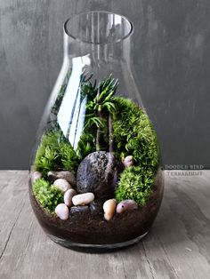 Carafe Moss Terrarium Gift Set - Live Houseplants Office Decor - Miniature Garden Under Glass by DoodleBirdie on Etsy https://www.etsy.com/listing/207483391/carafe-moss-terrarium-gift-set-live