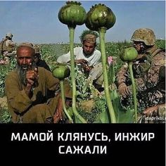 War on drugs must be Afghan top priority: UN chief War On Drugs, Funny Phrases, Stupid Funny Memes, Adult Humor, Afghanistan, Satire, Good Mood, Hydroponics, Poppies