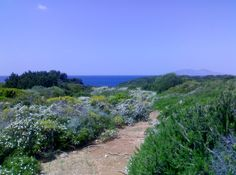 A natural path on Giannutri Island, #maremma #tuscany #italy