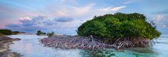 Mangrove Cuaracao
