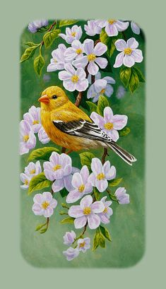 Goldfinch Iphone Case V1 IPhone 5 Case for Sale by Crista Forest