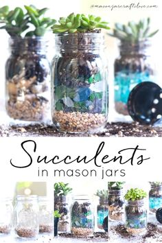 How to make mason jar planters. Succulents planted in mason jars. How to layer gravel, sea glass, soil and succulents in mason jars. Mason Jar Plants, Mason Jar Succulents, Mason Jar Garden, Mason Jar Terrarium, Blue Succulents, Glass Garden, Herb Garden, Garden Art, Pint Mason Jars