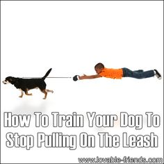 need to look into this. my dog is durn near perfect in every way, but she's awful on a leash.