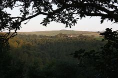 This one nicely shows the size of the forest. Secret Places, Banks, Acre, Woodland, Scenery, River, Sunset, Outdoor, Outdoors