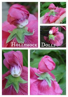 Hollyhock Dolls made from hollyhock blooms. They look gorgeous floating in a birdbath.