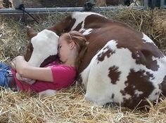 Napping with her cow at the NY state fair. >I seen a little girl doing the same thng at the state fair in syracuse! Animals For Kids, Farm Animals, Animals And Pets, Funny Animals, Cute Animals, Beautiful Creatures, Animals Beautiful, Pet Cows, Baby Cows