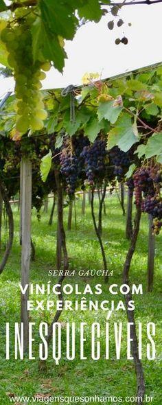 Cinco vinícolas na Serra Gaúcha com experiências inesquecíveis, além da tradicional degustação de vinhos.