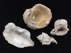 GROUPING OF SHELLS.