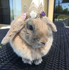 Gold Crown / Bunny Crown for rabbits and small pets