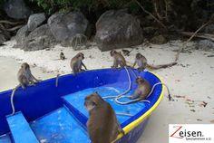 Affeninsel in Thailand Thailand, Animals, Tour Operator, Travel, Animales, Animaux, Animal, Animais