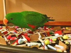 Foraging Tray: This owner had a great idea, fill a shallow tray with folded card board, cut up straws & beads. For treats they used pumpkin seeds, Goldenfeast & his dry food pellets. The bird gets the fun of exploring & challenge of finding food. To clean up, he just dumps everything in a colander and shakes out the crumbs.
