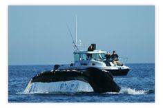Jim Maya's Whale Watch Charters - small boat = lots of fun.